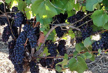 Private Vineyards